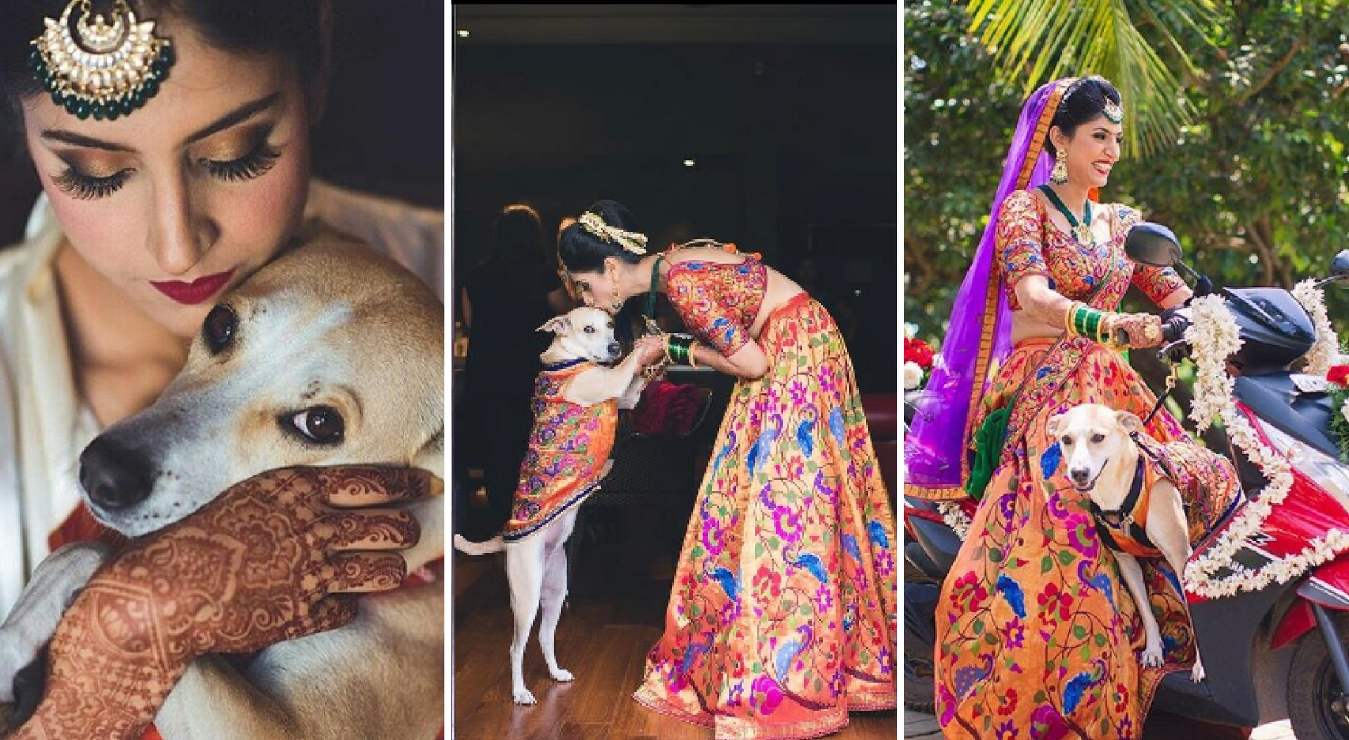 bridal entry with pet