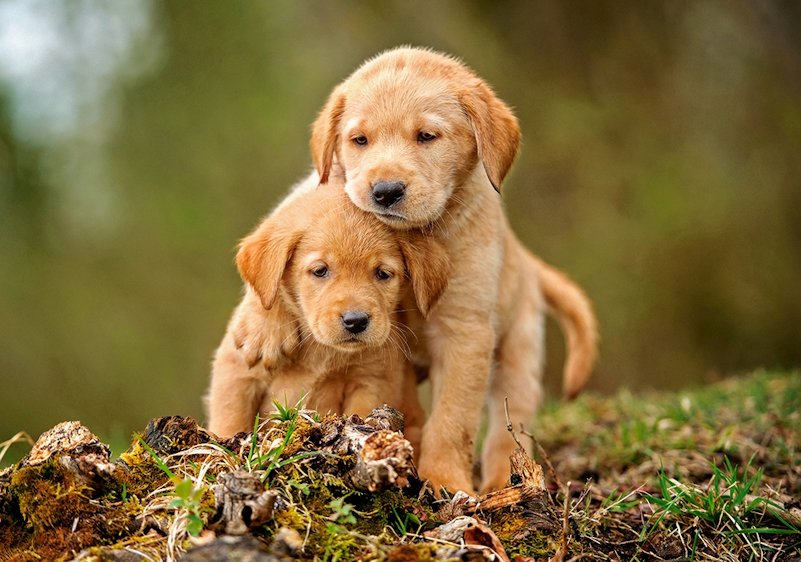 Chubby puppy love